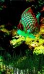 Bubble Fish live wallpaper screenshot 1/3