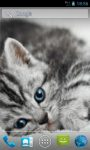 Cute Gray Cat Live Wallpapers screenshot 1/3