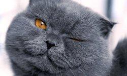 Free Cute Siberian Kittens Images  screenshot 4/6