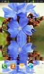 Blue Flower Reflection Live Wallpaper screenshot 1/3