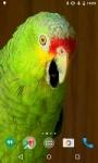Parrots HD Video Live Wallpaper screenshot 1/4