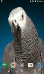 Parrots HD Video Live Wallpaper screenshot 2/4