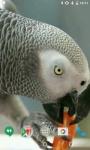 Parrots HD Video Live Wallpaper screenshot 4/4