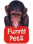 Funny Pets screenshot 1/1