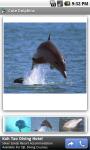 Cute Dolphins screenshot 1/3