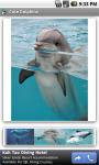 Cute Dolphins screenshot 2/3