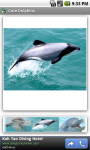 Cute Dolphins screenshot 3/3