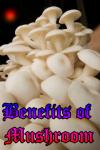 Benefits of Mushroom screenshot 1/3