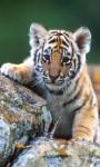 Animal HD Wallpaper- Forest screenshot 3/3