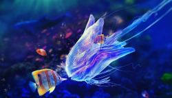 Jellyfish Wallpaper HD Slideshow NEW live screenshot 1/6