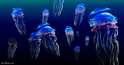 Jellyfish Wallpaper HD Slideshow NEW live screenshot 3/6