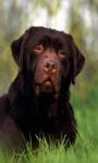 black Dog LWP screenshot 1/3