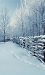 Beautiful Winter Pictures Wallpaper screenshot 5/6