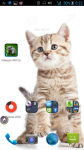 Wallpaper With Cats screenshot 4/4