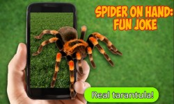 Scary Spider AR - Prank joke screenshot 1/3