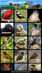 Happy Birds Song Ringtone screenshot 1/3