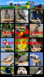 Happy Birds Song Ringtone screenshot 3/3