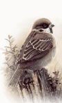 Bird Shine Live Wallpaper screenshot 1/3