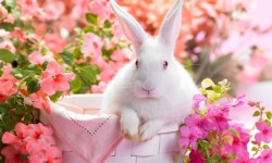 Cute Funny Rabbits Backgrounds Android screenshot 3/3