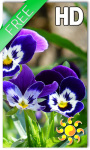 Pansy flowers Live Wallpaper screenshot 1/2