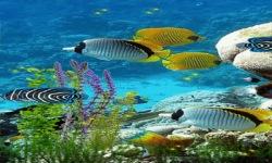Underwater Beauty Live Wallpaper screenshot 2/3