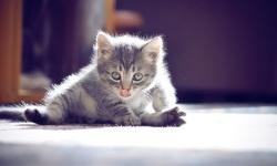 Cute Cats Wallpaper HD screenshot 4/4
