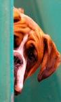 Dog Watching Live Wallpaper screenshot 1/3