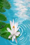 Beautiful Flowers Wallpaper Pic screenshot 1/3