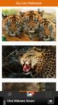 Big Cats Wallpaper screenshot 2/5