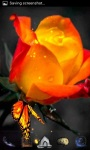 Orange Rose Live Wallpaper screenshot 1/3