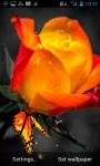 Orange Rose Live Wallpaper screenshot 2/3