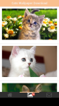 Cats Wallpaper Download screenshot 2/6