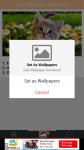 Cats Wallpaper Download screenshot 4/6
