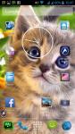 Cats Wallpaper Download screenshot 6/6