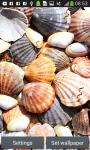 Seashells Live Wallpapers screenshot 2/6