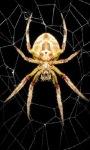 Spider LWP screenshot 1/3