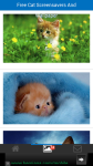 Free Cat Screensavers And Wallpaper screenshot 2/6
