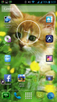 Free Cat Screensavers And Wallpaper screenshot 6/6