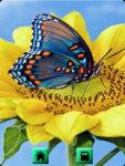 Butterfly Wallpapers : Butterflies Wallpaper screenshot 2/4