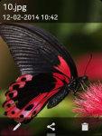 Butterfly Wallpapers : Butterflies Wallpaper screenshot 3/4