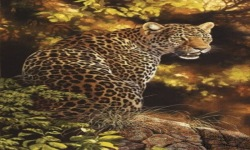 Forest Panther Live Wallpaper screenshot 2/3