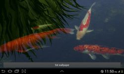 Real Koi Live Wallpaper screenshot 3/4