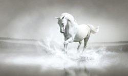 Horses in Water Wallpaper Android screenshot 1/4