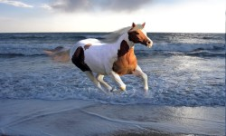 Horses in Water Wallpaper Android screenshot 2/4