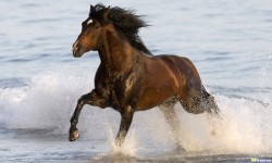 Horses in Water Wallpaper Android screenshot 3/4