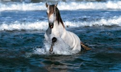 Horses in Water Wallpaper Android screenshot 4/4