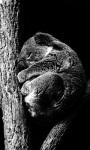 Koala Taking A Nap Live Wallpaper screenshot 1/4