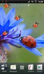 Red Ladybug and Corn Flower Live Wallpaper screenshot 1/3