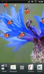 Red Ladybug and Corn Flower Live Wallpaper screenshot 2/3