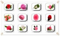 Camellia Flowers Onet Classic Game screenshot 1/3